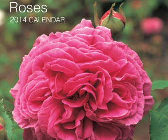 Calendrier Roses 2015