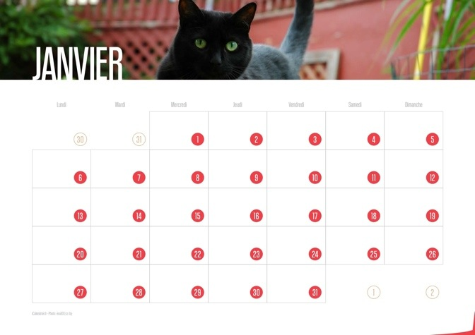 Calendrier 2014 Chats et Chatons