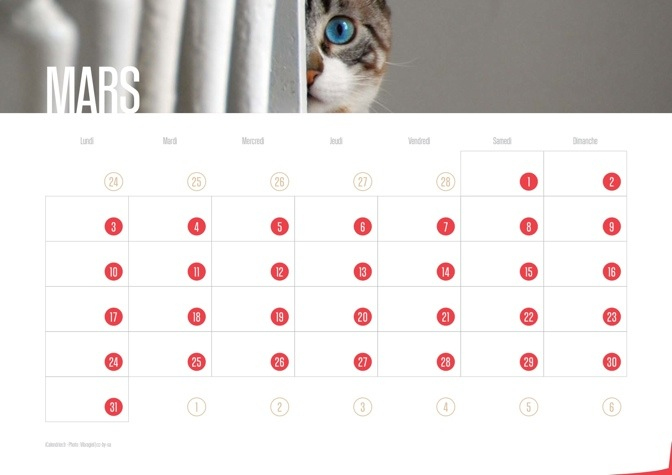 Calendrier JPEG Mars 2014 Chats et Chatons