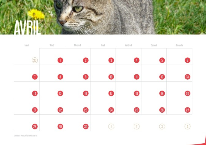 Calendrier JPEG Avril 2014 Chats et Chatons