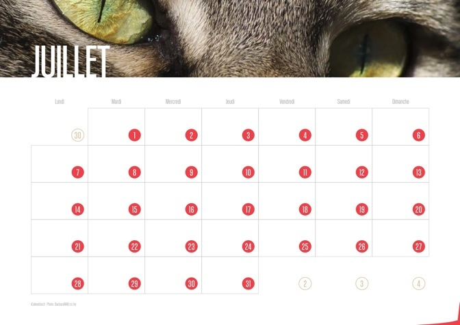 Calendrier JPEG Juillet 2014 Chats et Chatons