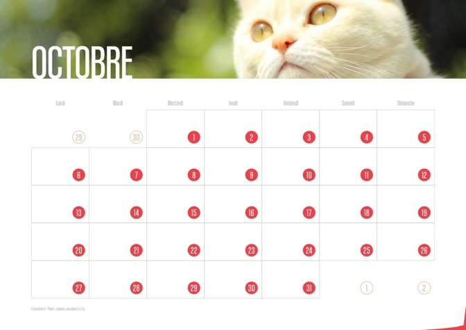 Calendrier JPEG Octobre 2014 Chats et Chatons