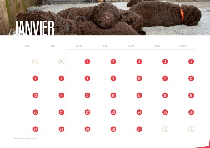 Calendrier 2014 Chiots
