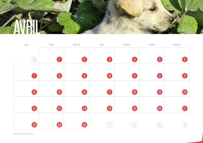 Calendrier JPEG Avril 2014 Chiots