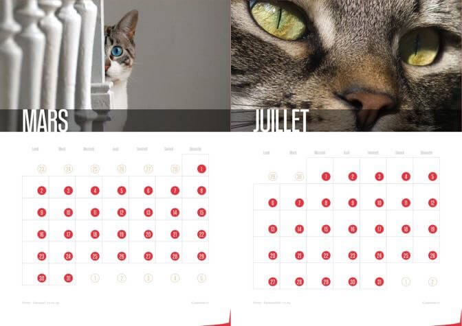 Calendrier 2015 Chats et Chatons