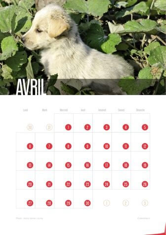 Calendrier JPEG Avril 2015 Chiots
