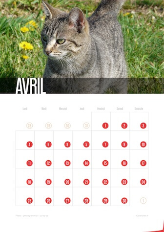 Calendrier JPEG Avril 2016 Chats et Chatons