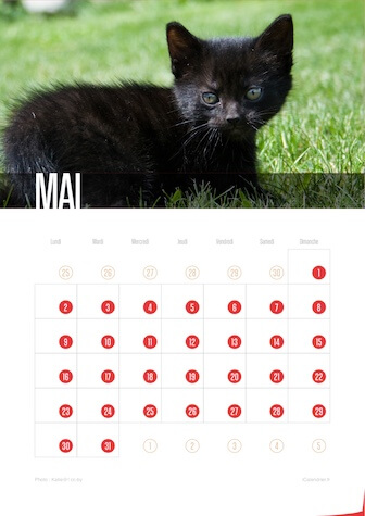 Calendrier JPEG Mai 2016 Chats et Chatons