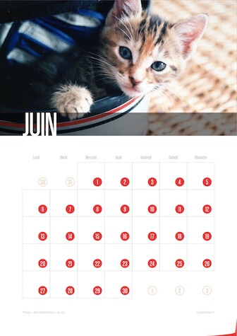 Calendrier JPEG Juin 2016 Chats et Chatons