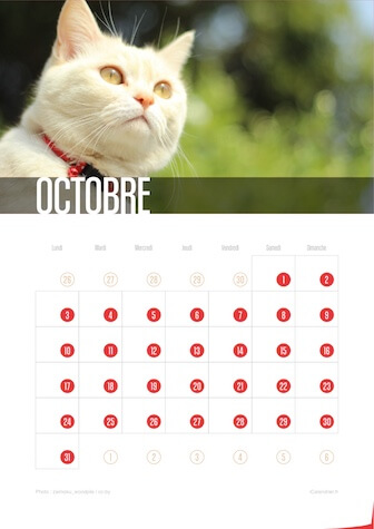 Calendrier JPEG Octobre 2016 Chats et Chatons