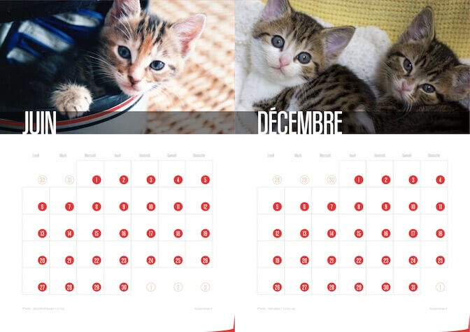 Calendrier 2016 Chats et Chatons